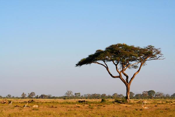 アフリカのマルラ